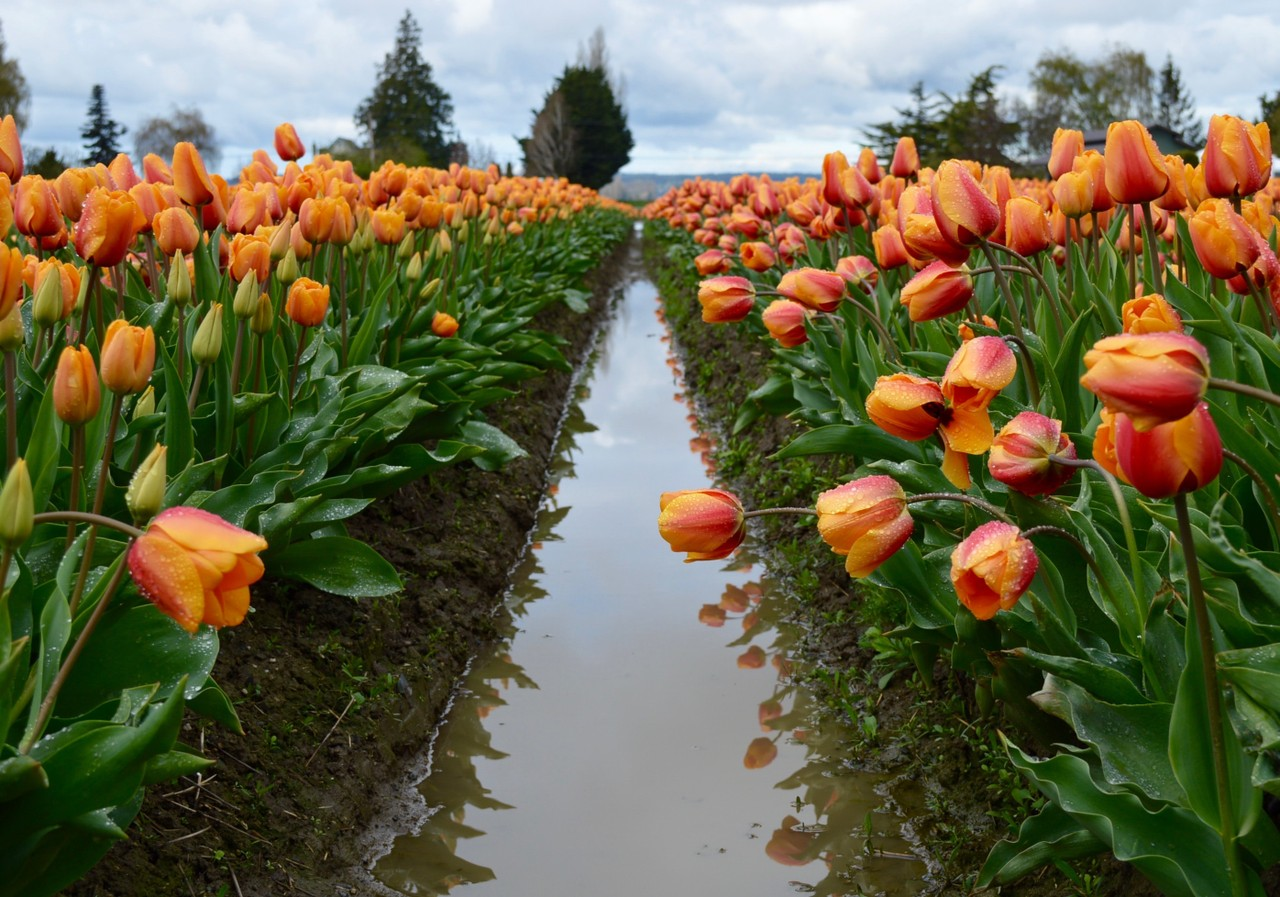 "Picture for article ""Agriculture Industry in Skagit County"""