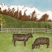 American Alps Ranch logo