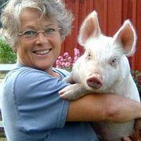 Pigs Peace Sanctuary logo
