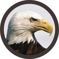 Birdseye Financial logo