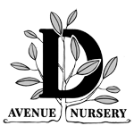 D Avenue Nursery logo