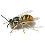 Arrow Pest Control Inc logo