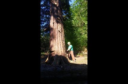 Photo uploaded by Olsen Tree Service