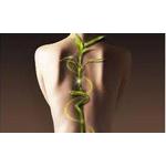 Riverside Chiropractic & Massage Clinic logo
