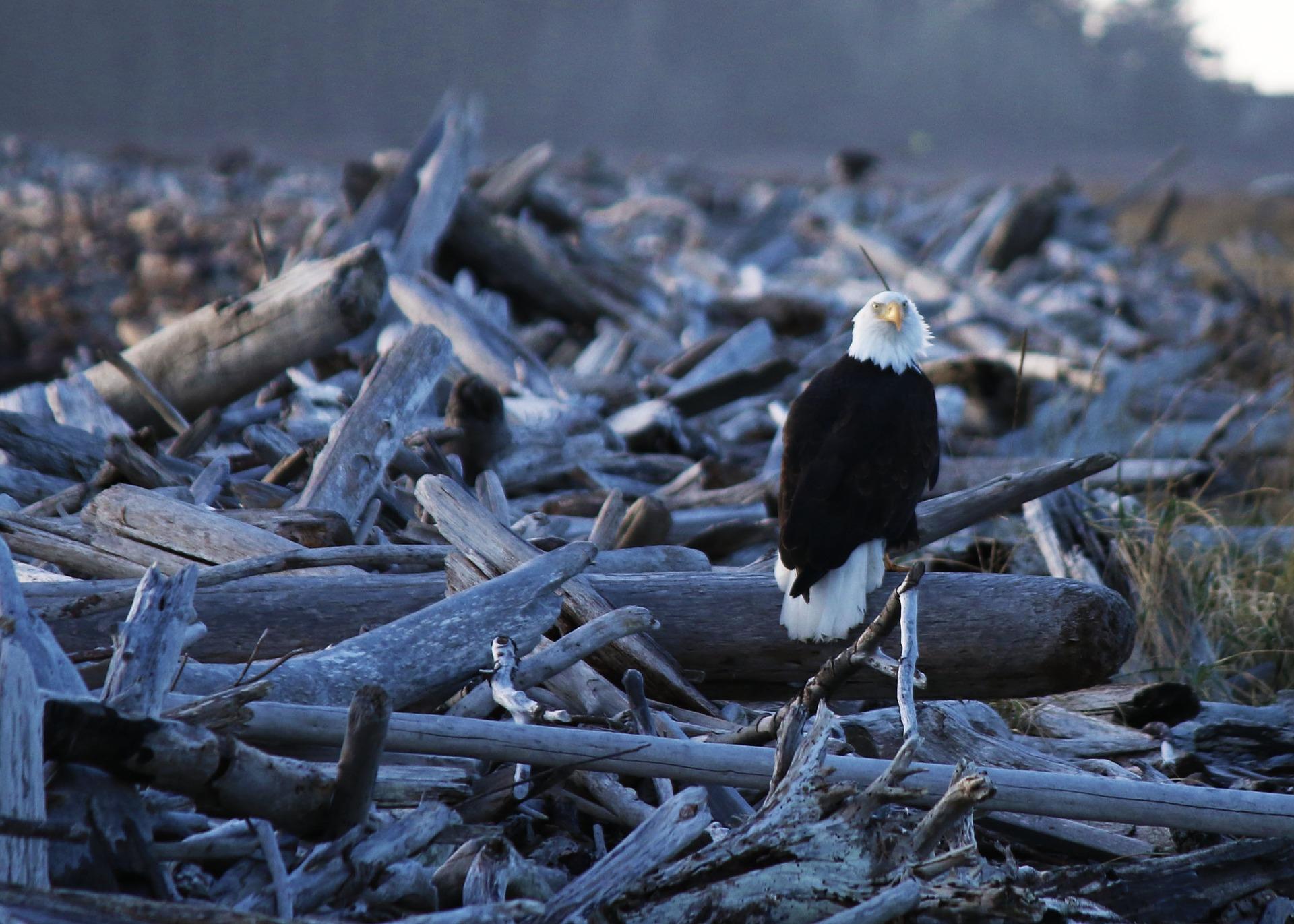 Picture for Oak Harbor, WA