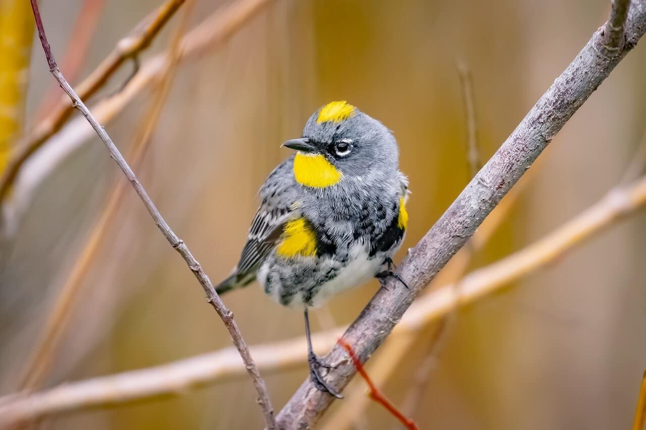 Snohomish County Bird